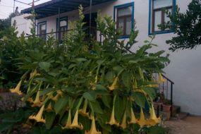 Karaburun Köy Evi Pansiyon