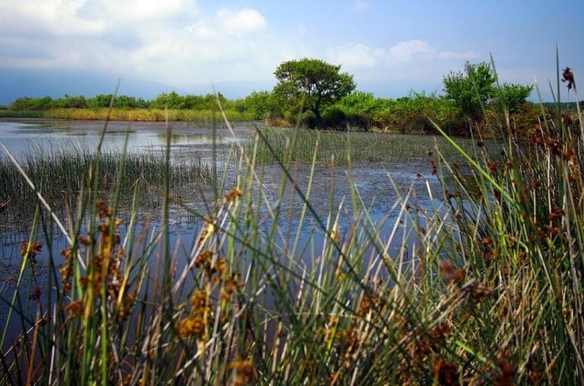 Bursa Dalyan Gölü